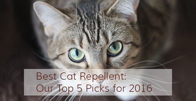 best-cat-repellent-our-top-5-picks-for-2016