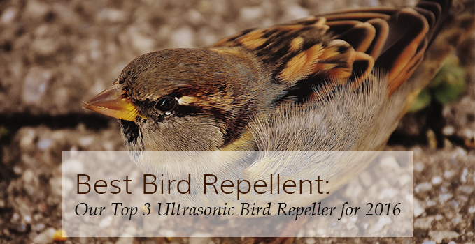 Best Bird Repellent | Top 3 Ultrasonic Bird Repeller for 2016