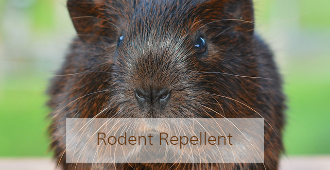 rodent-repellent