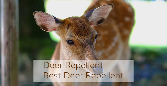 deer_featured_image