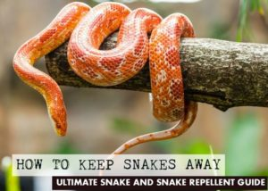 How to Keep Snakes Away Ultimate Snake Repellent Guide 3JPG