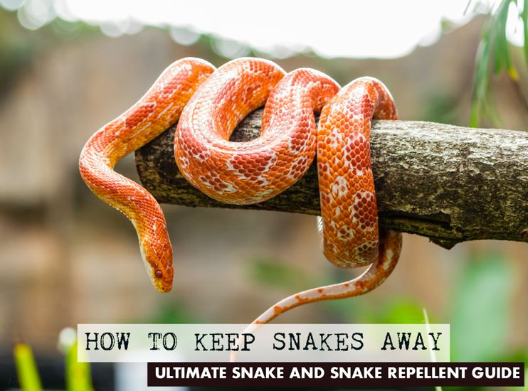 snakes how to get rid of them