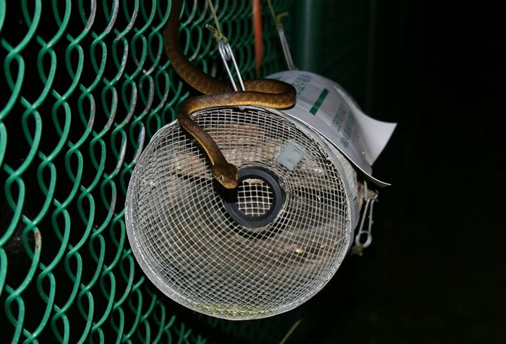 How To Get Rid Of Snakes Complete Snake Repellent Guide