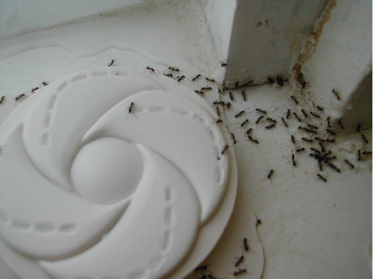 Very Small Ants In Bathroom. Home Depot Small Bathroom Vanity