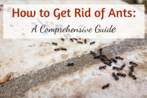 Natural Ant Repellent - How to Get Rid of Ants