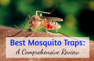 Best Mosquito Trap - Comprehensive Guide