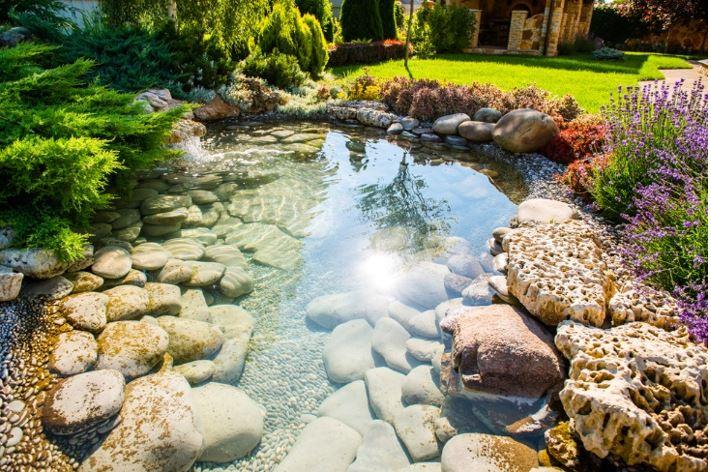 Best Mosquito Trap - Pond