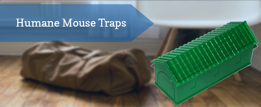 humane-mouse-traps