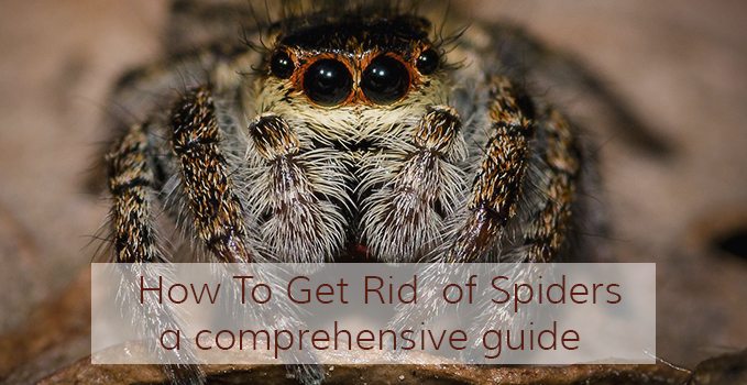 how to get rid of spiders using natural spider repellents