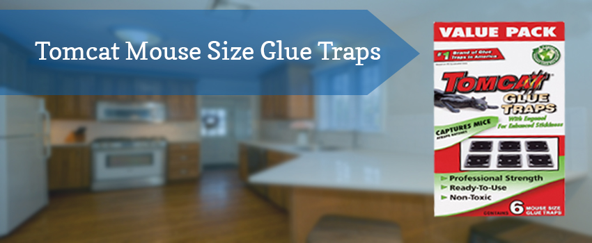 tomcat-mouse-size-glue-traps