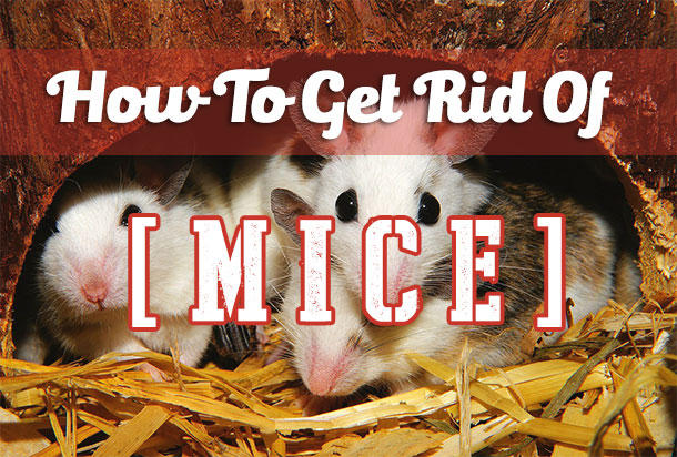 How To Get Rid Of Mice Finding The Best Mouse Repellent