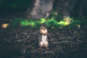 best-squirrel-bait