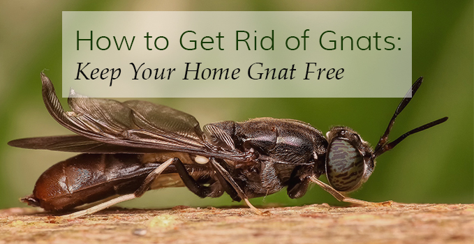 How to get rid of gnats keep your home gnat free for How to stop spiders coming in your house