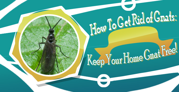 how to get rid of gnats keep your home gnat free. Black Bedroom Furniture Sets. Home Design Ideas