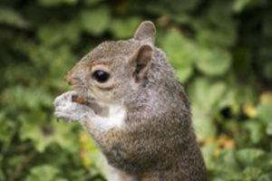 ground-squirrels