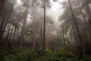 humid_forest_resize