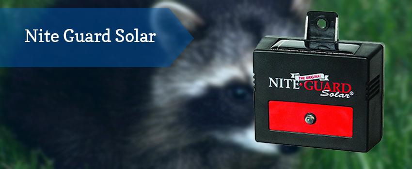 nite-guard-solar