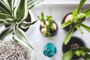 plants_resize