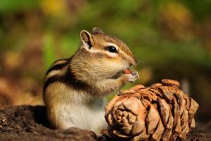 tree-squirrels