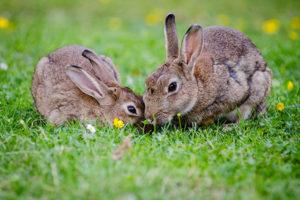 understanding-rabbits