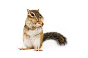 understanding-squirrels