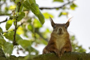 squirrel-ulm-garden-summer-162061