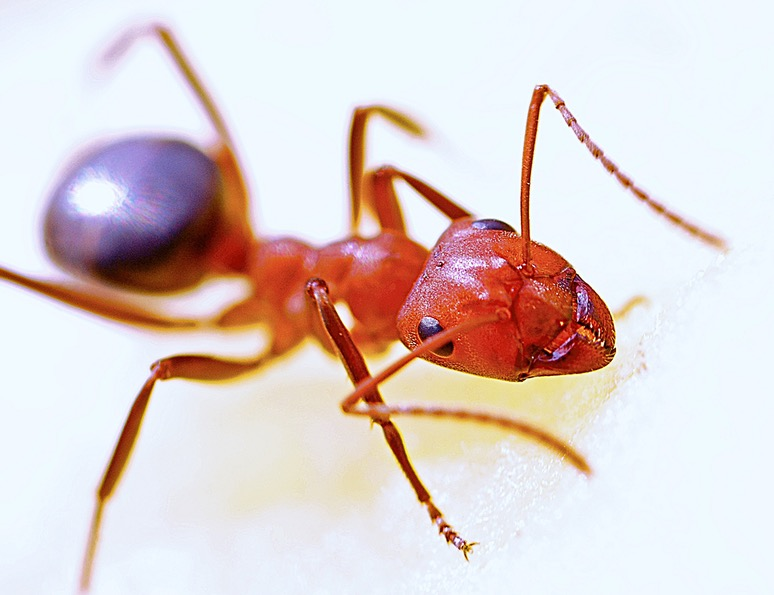What Kills Ants Instantly Guides Tips And Things You Need To Know