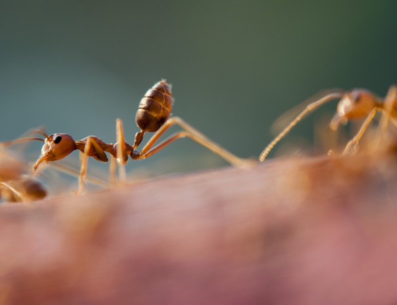 homemade ant repellent
