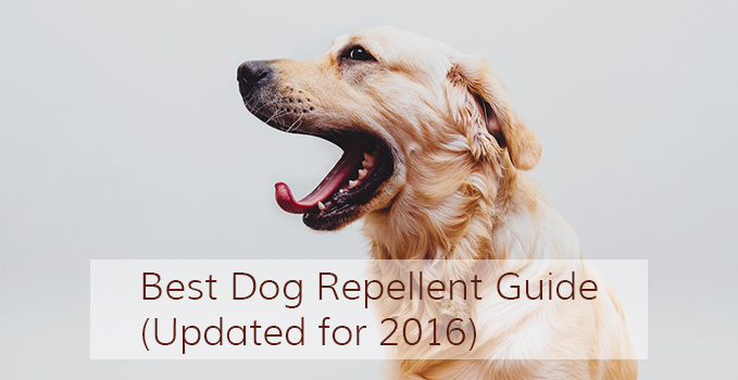 Best Dog Repellent Guide Updated For 2017